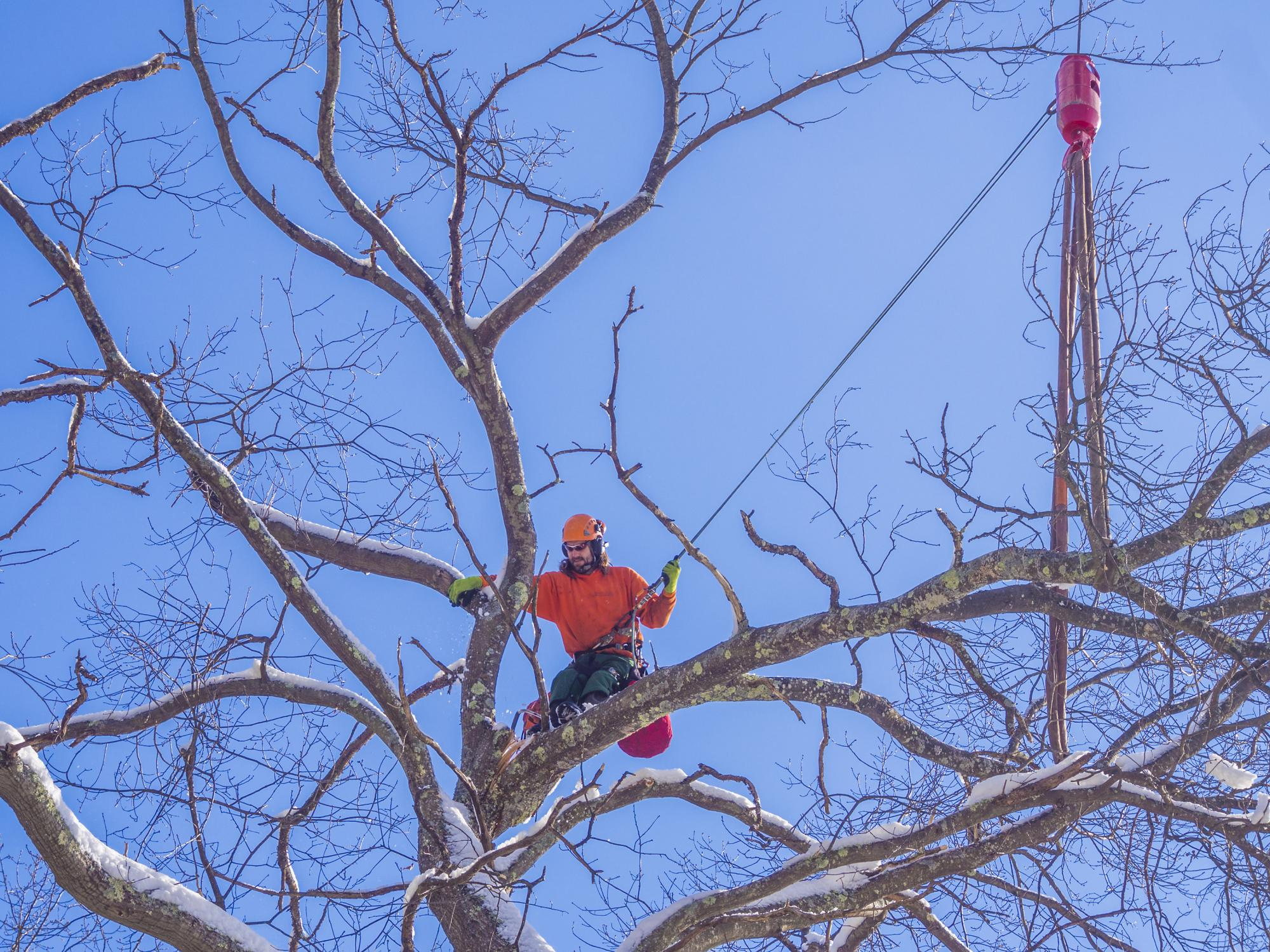 Garland Tree Services - Commercial Tree Services 2