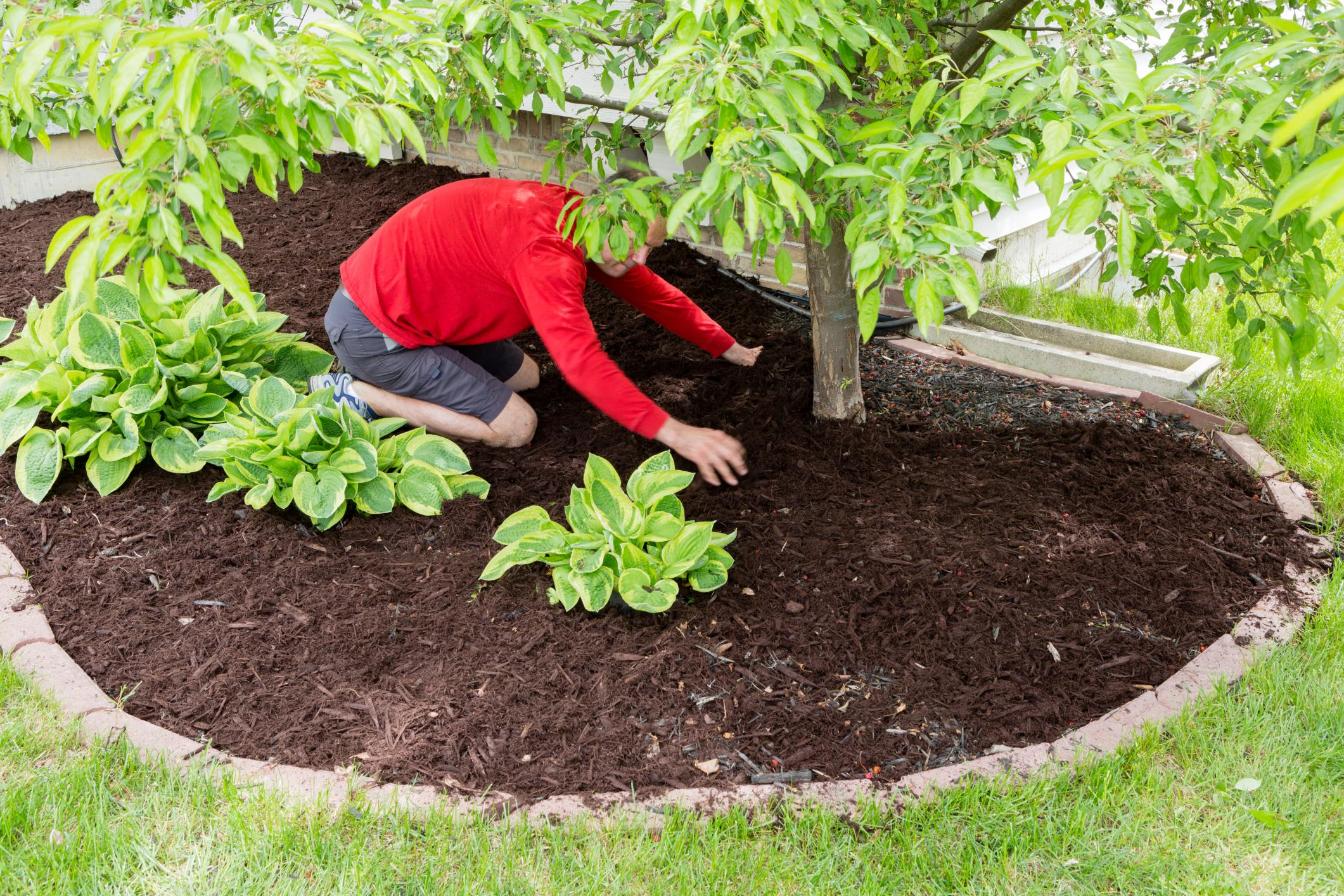 Garland Tree Services - Deep Root Fertilization 1