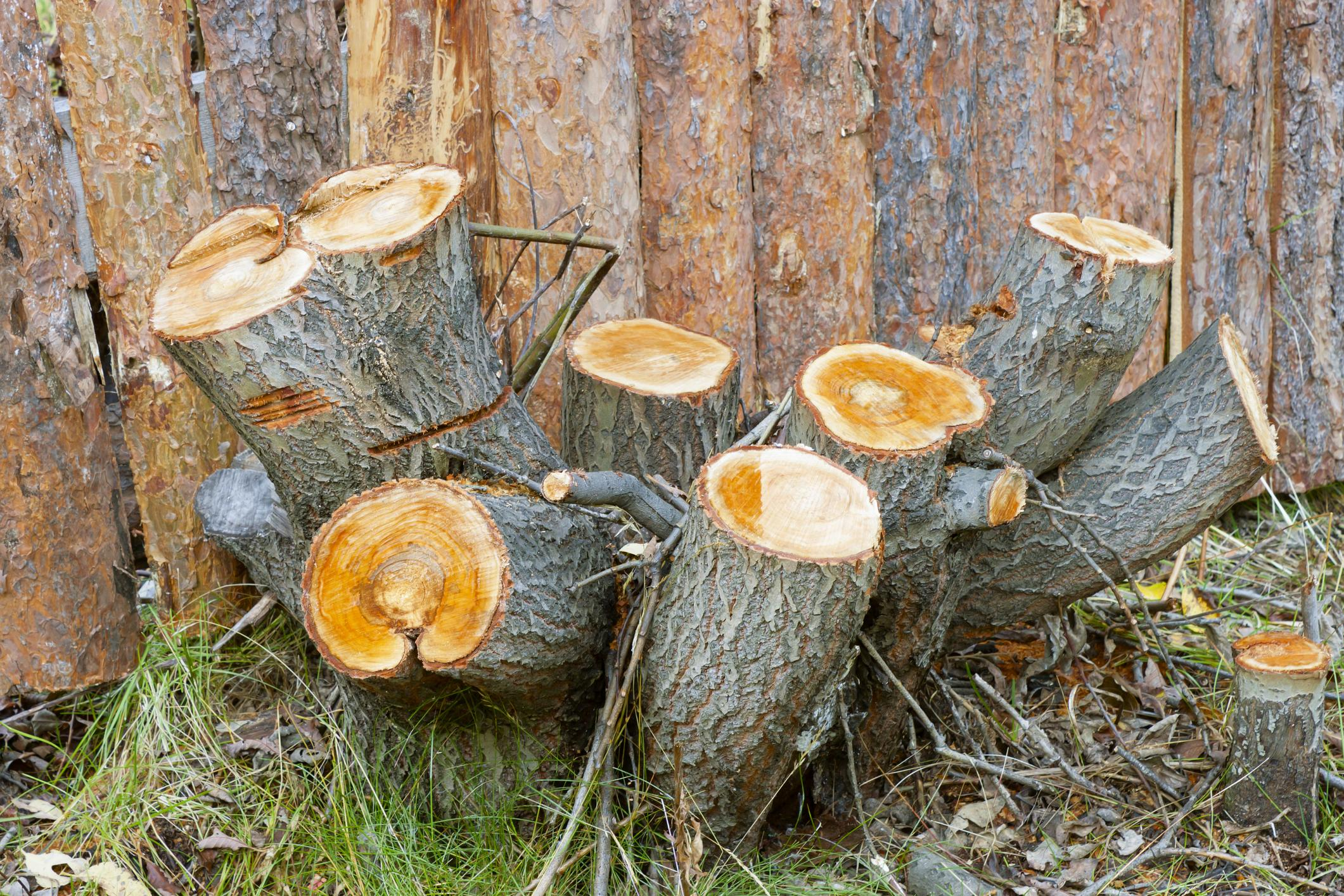Garland Tree Services - Tree and Stump Removal 1